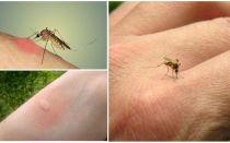 Pourquoi les moustiques piquent certaines personnes plus que d'autres