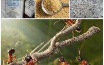 Lutte contre les fourmis dans les remèdes populaires de la parcelle de jardin