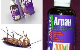 Remède Agran pour les cafards