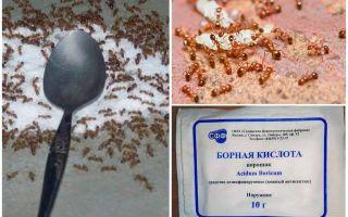 Comment traiter les fourmis rouges