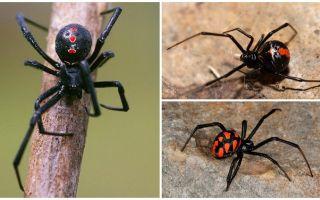 Variétés de photos d'araignées avec noms et descriptions