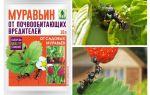Fourmis 10g de fourmis: mode d'emploi et avis