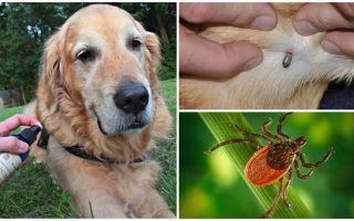 Sprays pour chiens contre les tiques et les puces