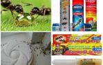 Comment détruire les fourmis et la fourmilière