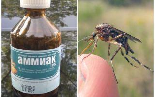 Ammoniac liquide de moustiques