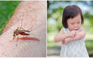 Combien de jours dure la piqûre de moustique?