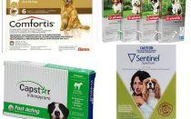 Comment se débarrasser des puces chez le chien, le moyen le plus efficace de puces