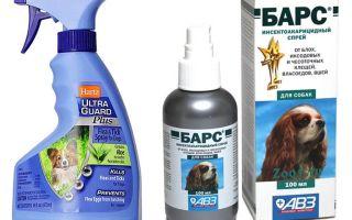 Le meilleur spray contre les puces pour les chiens