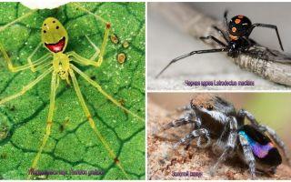 Les plus belles araignées du monde