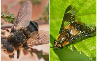 La différence entre gadfly et aveugle