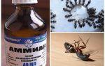 Ammoniac des fourmis et des pucerons