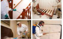Destruction de punaises de lit dans l'appartement avec garantie
