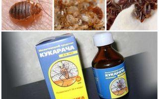 Cucaracha remède contre les punaises
