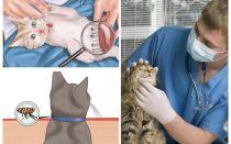 Comment se débarrasser des puces chez un chat ou un chat à la maison