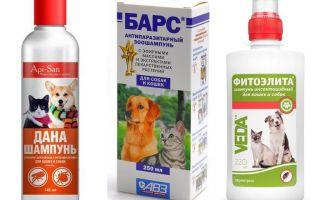 Le shampooing anti-puces le plus populaire et le plus efficace pour les chiens