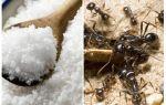 Sel contre les fourmis dans le jardin