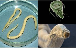 Comparaison de Giardia et Worms