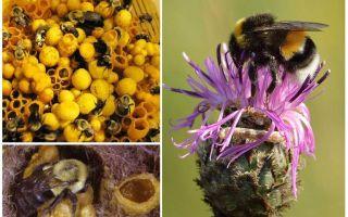 Le miel a-t-il des bourdons?