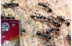 Signifie tonnerre 2 des fourmis