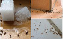 Comment se débarrasser des fourmis dans une maison privée