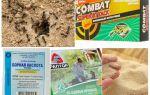 Attrait pour les fourmis