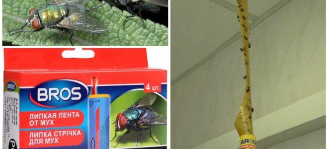 Magasin et remèdes populaires pour les mouches