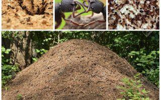 La vie de fourmis dans une fourmilière