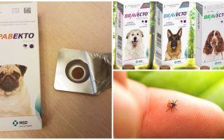 Comprimés Bravekto de tiques pour chiens