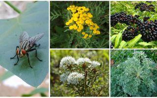 Quelles odeurs ont peur des mouches et des moustiques