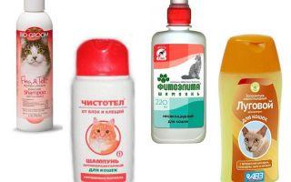 Les meilleurs shampooings aux puces