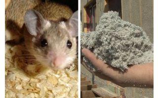 Quel type d'isolation ne mange pas de souris