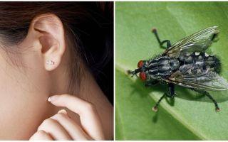 Comment obtenir une mouche de votre oreille à la maison