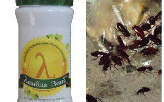 Sonde Lambda Remedy pour les blattes