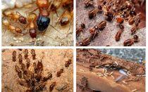 Qui sont les termites