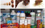 Examen des recours les plus efficaces contre les insectes domestiques