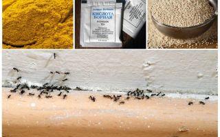 Fonds provenant des fourmis dans la maison du pays
