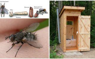 Comment se débarrasser des mouches dans les toilettes dans la rue