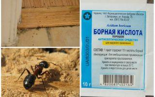 Comment enlever les fourmis d'une maison en bois