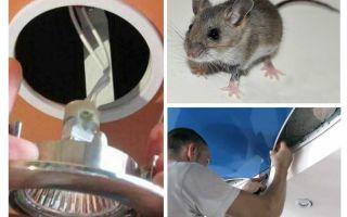 Comment se débarrasser des souris dans le plafond tendu