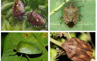 Insectes de jardin