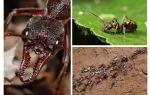 Tout sur les fourmis