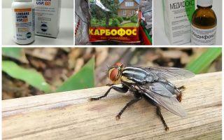 De quoi les mouches et les mouches ont-elles peur, examen des fonds