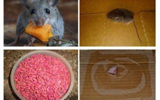 Comment faire sortir les souris du garage