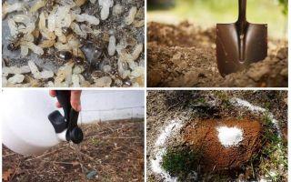 Comment faire sortir les fourmis des remèdes traditionnels