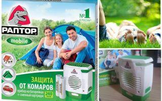 Raptor sur les batteries de moustiques