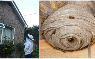 Désinsectisation des guêpes et des nids de guêpes