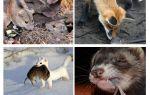 Qui mange des souris