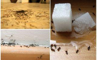 Comment enlever les fourmis d'un appartement à la maison