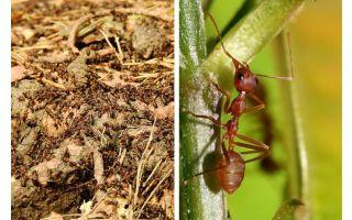 Qu'est-ce que les fourmis utiles