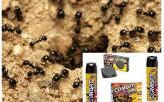 Remèdes pour le combat des fourmis